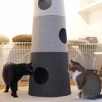 空カフェ ~ゆる猫との暮らし~