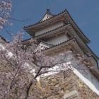 『明石城の桜。須磨浦公園』の画像