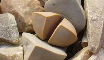 どう見ても石にしか見えない「魔玉」と呼ばれる不思議な植物