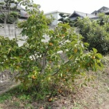 『駐車場農園・秋』の画像