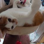 迷子猫見つけたい(隊) アムロ捜索