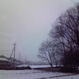 『雪やコンコ』の画像