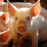 『【搾取】ひろゆき「日本国民は肉屋を応援する豚」←だったら肉屋になればいい』の画像