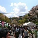 『吉野の桜【1601日目】』の画像