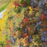 『紅葉中』の画像