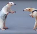 【動画】ミニサイズのアリクイの喧嘩 くっそ鈍い こいつらなめてるの?