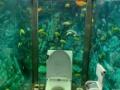 【画像】水族館トイレがこちらWWWW