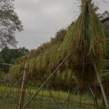 『もち米稲刈りに挑戦〜♪』の画像