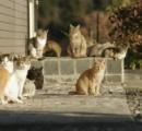 「ネコが統合失調症の原因になるかも」大学病院の論文が超話題に! 自殺、精神疾患とも関連