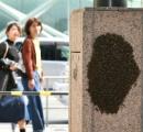 天神に数千匹のハチが突如出現し一時騒然 通行規制の騒ぎに 「引っ越し中」の休憩か