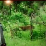 『地球ドラマチック  野生の雌ヒョウ マナナ① 絆を深めた17年間の生涯』の画像