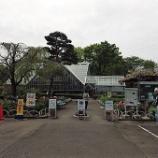 『4月の都立薬用植物園①』の画像