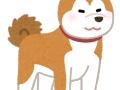 【悲報】ザギトワの秋田犬、めちゃんこデカくなっていた(画像あり)