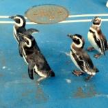 『のとじま水族館といえば!ペンギンにイルカショーそしてチンアナゴ』の画像