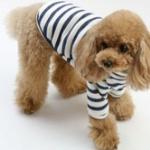 犬に「服」 防寒の効果はあまりなし