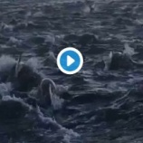 『夜明けに 何百頭ものイルカの大群!』の画像