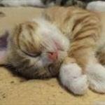 ネコは体重が5kgぐらいと小さいから人間を襲わないだけで、ネコが30kgぐらいだったら人間を襲ってるらしいな