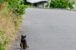セミも鳴く。暑い時には天野川沿いを涼しく散歩してみる〜交野さんぽ89〜