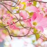 平成で最も歌われたカラオケ楽曲別ランキング!