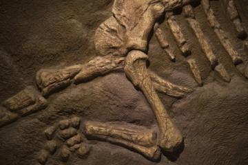 日本で発掘された主な恐竜の化石(2011年までの)