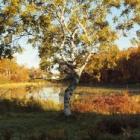 『志賀高原の紅葉10月19日』の画像