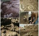 巨人の墓を発見 イラン(画像あり)