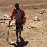 『飢餓が進む世界』の画像