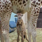 天王寺動物園スタッフブログ