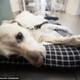 『今年も犬インフルエンザ』の画像