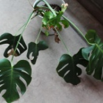 MAN WITH A PLANT -植物と人-