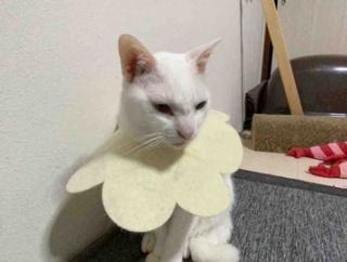 猫の自己イメージと現実 20210128