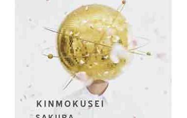 『キンモクセイ 「さくら」』の画像