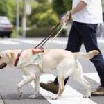 盲導犬お断りで嫌な思いをしたことがある人、9割