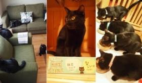【日本の店】  日本に 「クロネコ」 専門の 黒猫カフェが オープンしたらしいぞ!?   海外の反応