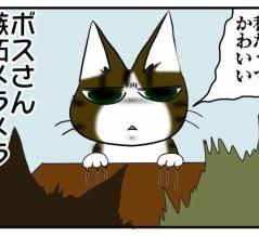ツンギレなうちの猫が、最近ツンスネ気味な件
