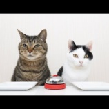 『猫ちゃんも賢いですね』の画像