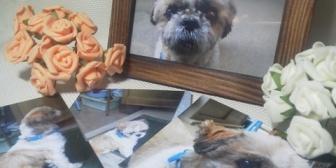 【友やめ】飼い犬が亡くなって病んだ内容のツイートをする友人に大丈夫?みたいな内容のラインを送ったら既読無視。→すぐには返せないよな、そっとしとこうと思ってた矢先に…