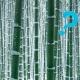 新スタッフ【フーコ】のご紹介 - 竹は寒さに弱い?&竹豆知識