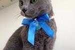 【拡散希望】猫が迷子になってます!~妙見坂にある「ほしだ幼稚園」周辺で2/28から探し中~