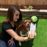 『スマホで犬たちの写真を綺麗に撮る方法』の画像