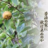 『苦渋の梨』の画像