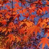 『秋の絶景! 紅葉が見ごろ、美しさにうっとり!!』の画像