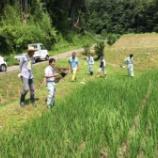 『契約栽培田の生育調査を行いました』の画像