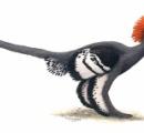最近の恐竜www
