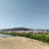 『背割堤防の桜を見に行ってまいりました。』の画像