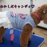 『トリミングの後はかわいいお洋服でおめかし犬に!』の画像