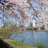 『わが家の桜10 14〜広瀬川』の画像