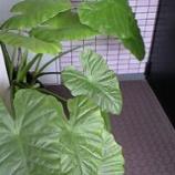 『我が家のジャングル』の画像