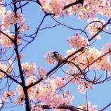 『◆【「忙しさ」は「心を亡くす」といわれますが】:ちょっと「ひと息」入れる習慣、をつくりましょう。』の画像