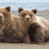 『クマに遭遇したことがある人』の画像